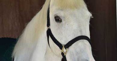 Sevastopol has been described as a legend and an utter genius. Photo: The Horse Trust