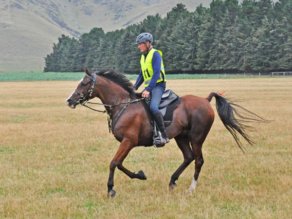Philip Graham and Rosewood Bashir heading for the finish line after completing 160km at New Zealand's 3* championships. The combination won in 10:43.00.
