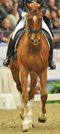 Analysis of a French study has revealed that dressage horses appear to be the stress bunnies of the horse world.