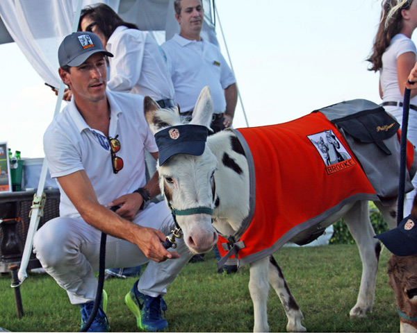 Brooke USA ambassador Nic Roldan with one of the miniature donkeys sporting the PoloGear saddle bags for donations to Brooke USA.