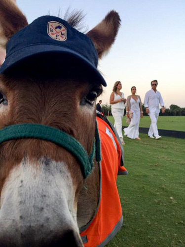One of the miniature donkey ambassadors helping out at the party.