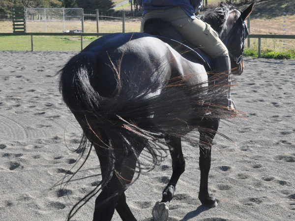 Owners surveyed by researchers were concerned about the effects of reduced owner access, changes in exercise levels that might lead to weight gain, and the health risks the changes posed to some older horses.