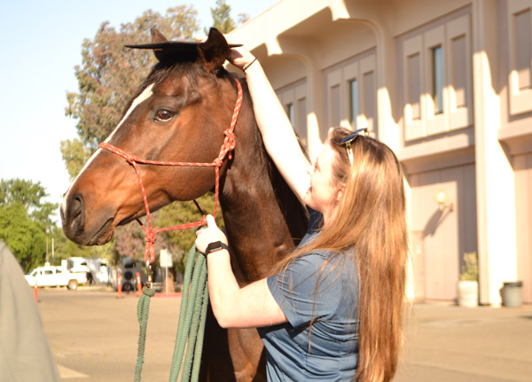 """""""Dr Teddy"""" has received anhonorary degree from UC Davis for being a """"Master Equine Educator""""."""