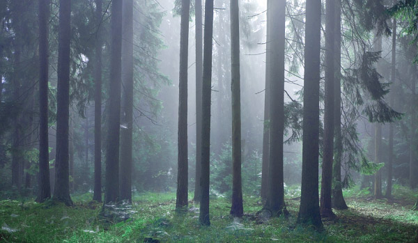 A view of the primeval forest in Bialowieza National Park, Poland, where the horses known as tarpans were last seen between the late 18th and early 19th century. Photo: iStock.com/Aleksander Bolbot.