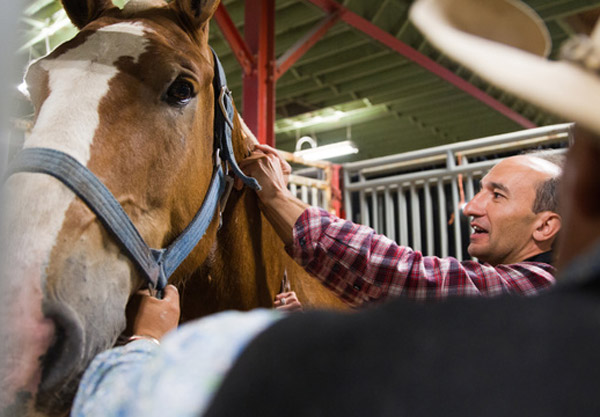 Dr Renaud Leguillette, Calgary Chair of Equine Sports Medicine at the University of Calgary, explores the effects of the transportation of the horses, and their participation in the heavy horse pull, on the animals' metabolism. Photo: Riley Brandt, University of Calgary