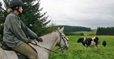 When encountering the unexpected on a ride, your first strategy is simply to stop and look at the animal or object. Try to remain relaxed - something your horse will sense - and speak reassuringly to your mount. Rub his neck.