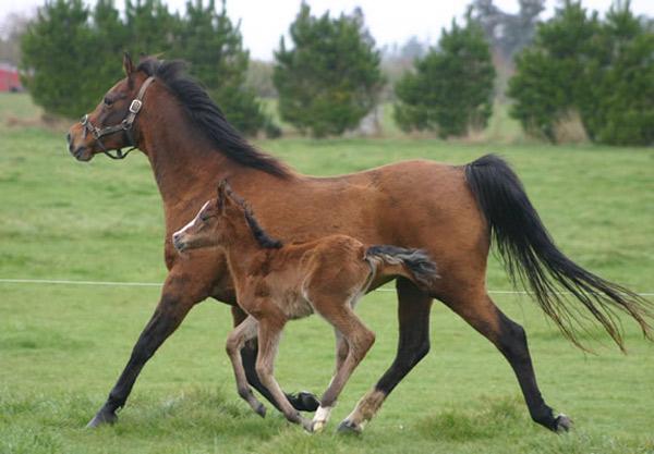 mare-foal600-8454