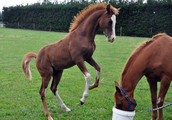 The first foals using Precision Genetic Progress are expected to be on the ground in 2019.