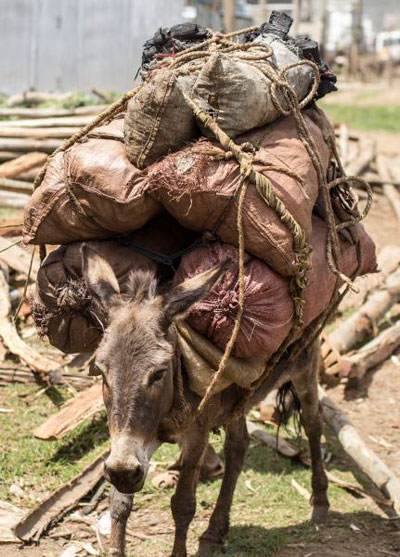 Image result for loaded pack mule gif