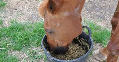A feed balancer will add minerals and nutrients to a horse's diet.