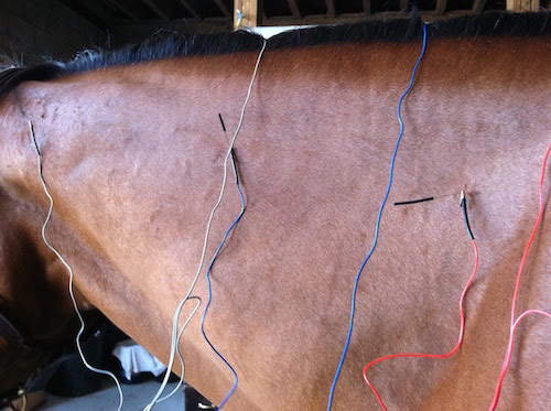 Acupuncture stimulates particular points to relieve pain in the horse.