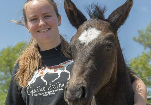"""Samantha Wuest, a graduate student majoring in animal science at Southern Illinois University Carbondale, enjoys some one-one-one time with Cadbury, a colt born during """"foal watch,"""" an educational, hands-on part of the equine science program at the university. Students witness and record a live birth of a horse during the program, learning not only about horse reproduction and birth but also horse behavior and good practices under stress. Photo: Russell Bailey"""