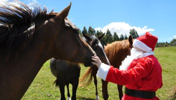 say neigh to a commercial christmas horse charities ask - Christmas Horses