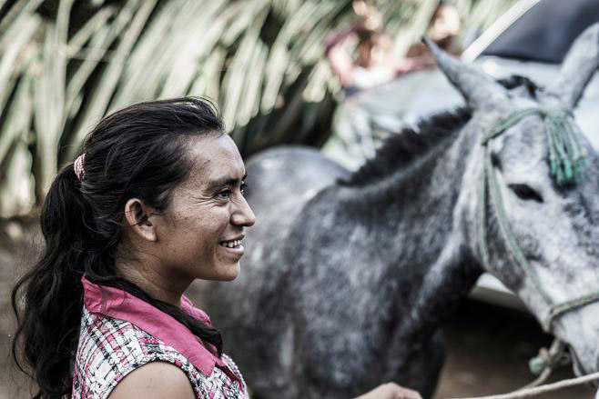 Guatemala's 250,000 equines make it the most densely populated country for working equines in Central America.© Enrique Urdaneta