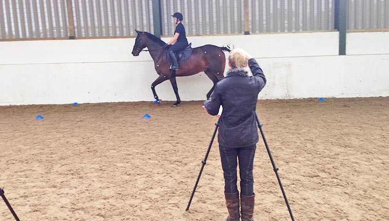 As part of their studies into biomechanics, Bishop Burton College students analysed the forelimb gait in horses in relation to the bit.