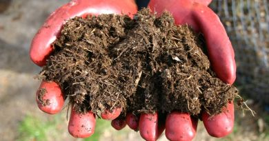 Different methods of processing horse manure were put under scrutiny in a study in Sweden.
