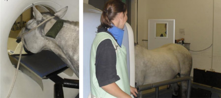 Cutting-edge imaging is improving equine head and spine diagnoses.