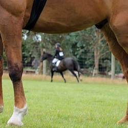 Few horse welfare issues make it to Swiss sanctions commission, study finds