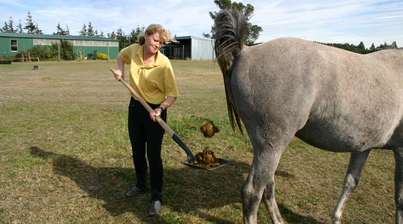 Keeping an eye on manure is a good idea for horse owners.