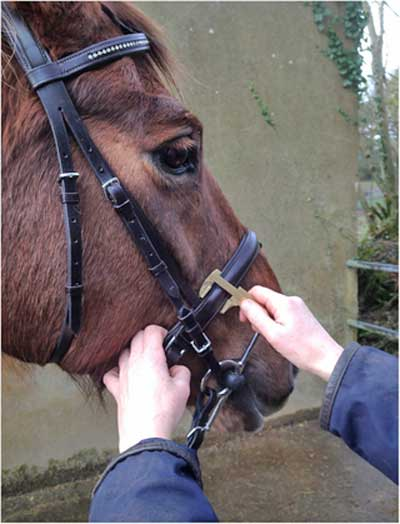 Callipers were used to measure the width of the nosebands in the study.