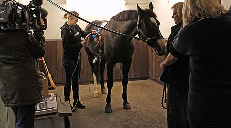 Police horse Viggo gets set up to test thermoelectric sensors for their ability to assess the health of his hooves. The interdisciplinary research project is managed by Chalmers University of Technology and the University of Gothenburg, as well as industry collaborators. Photo: Mia Halleröd Palmgren