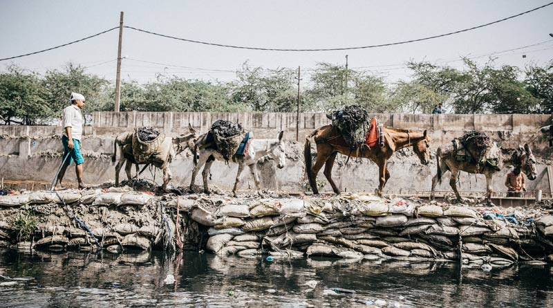 Four equines working together in India.