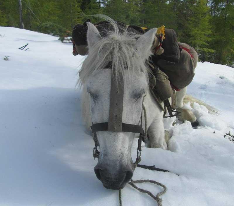 Katchula enjoys a nap in the snow.