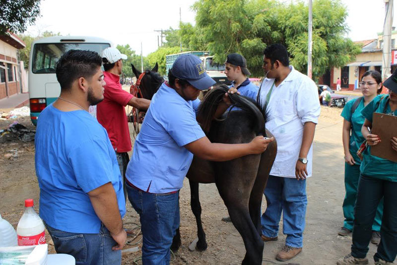 Students watch as a veterinarian works with a horse in Nicaragua.