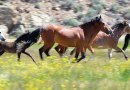 Freedom at last: Idaho preserve welcomes wild horses home
