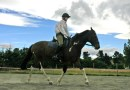 Scoring system finds lameness in horses considered sound by their owners