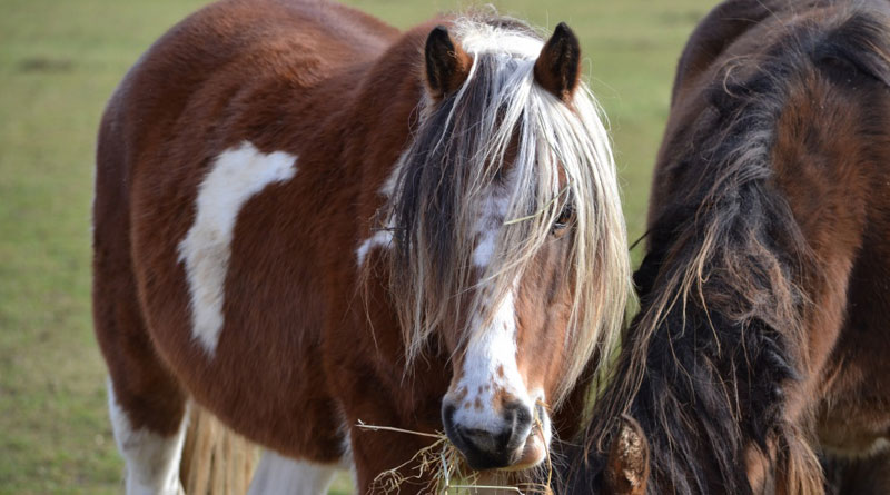 Bracken and Conker, who were both rescued from Bodmin Moor, are firm friends.