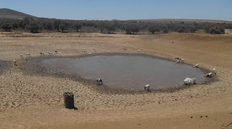 A depleted water hole in Kenya.