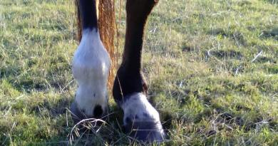 Tendon or ligament injury? A combo treatment might be best for your horse