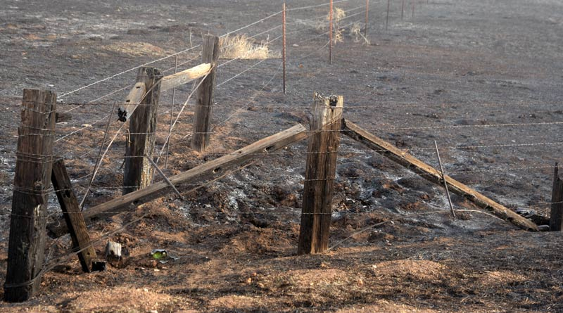 Many miles of fences will either have to be repaired or replaced following the wildfires in Texas.