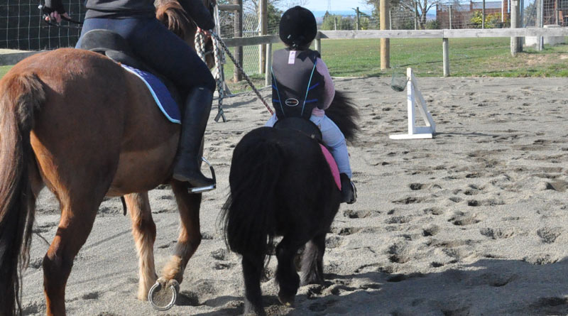 Children are getting injured around horses, even when not riding.