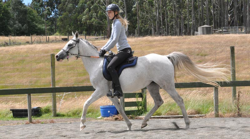 The Female Equestrian Health and Wellness CoP has over twenty members, including experts from the U.S., Canada, Ireland, England, and Australia.