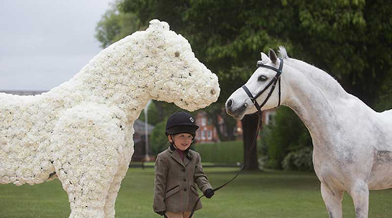 Nutkin meets his doppelganger, in the form of a spectacular floral artwork by Judith Blacklock comprising nearly 3000 white carnations. The floral horse was created to mark World Horse Welfare's 90th anniversary. Photo: World Horse Welfare