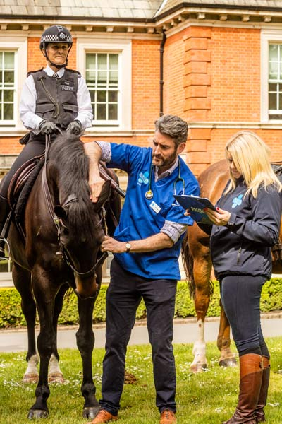 From checking teeth, hooves and eyes, to clambering up stepladders to take the vital statistics of the majestic horses, pet charity Blue Cross joined forces with the celebrated Police Mounted Branch to encourage horse owners to take part in the charity's National Equine Health Survey (NEHS) this week.