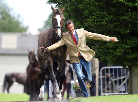 Mark Todd gets pushed onto the grass verge by Dusk till Dawn in the trot-up.