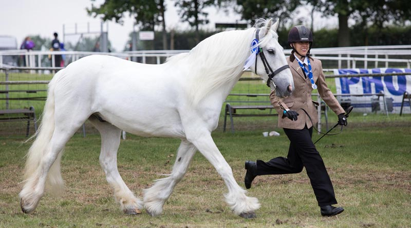 World Horse Welfare McCloud and Lorraine Holmes.