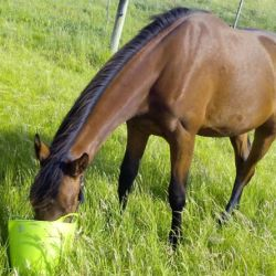 The challenges of stomach ulcers in horses: Scientists review the evidence