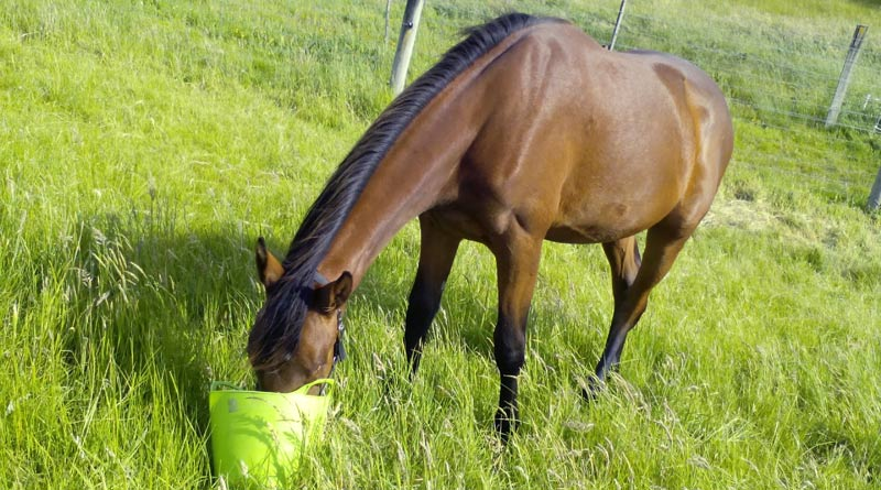 Taste preferences in horses have been found to vary between breeds, as well as sex.