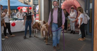 Therapy ponies Maggie and Rose make their entrance at Guy's Cancer Centre.