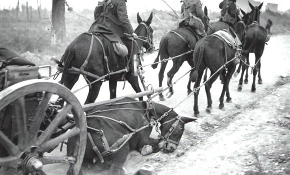 Horses and mules in WWI carried ammunition, food, water and other supplies to the front lines.