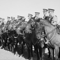 WWI horses in Palestine. © Brooke USA