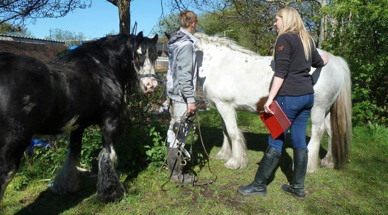 Zoetis has helped more than 500 horses who needed help in the past two years.