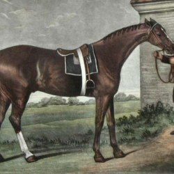 Famous English racehorse Eclipse, from a painting by George Stubbs.