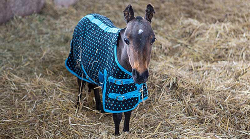 Star is set to become an adoption star with World Horse Welfare. Photos: World Horse Welfare