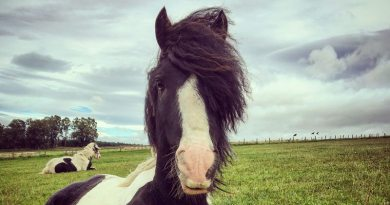 Copperfield (aka Ted) is one of eight ponies who are most in need of a new home.