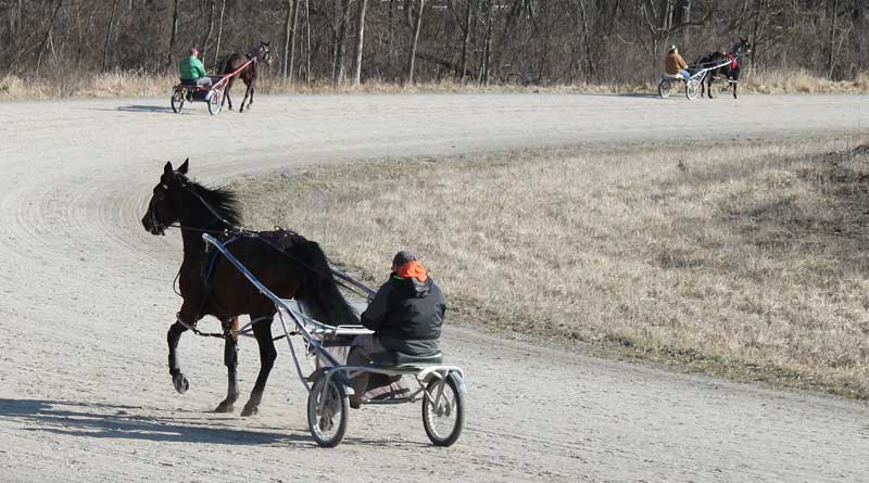 Harness racing horses being exercised in Salem Township, Michigan. Photo Dwight Burdette CC BY 3.0 via Wikimedia Commons